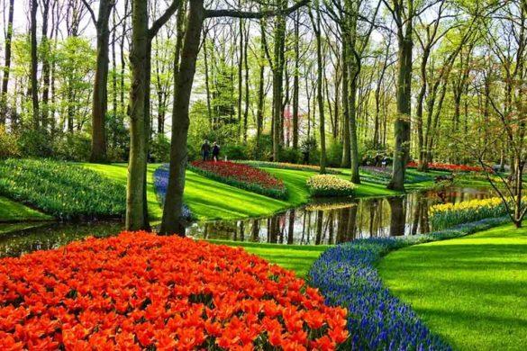 Manutenzione del giardino