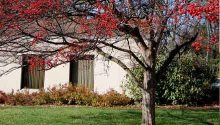 Crataegus-viridis-alberi-da-giardino
