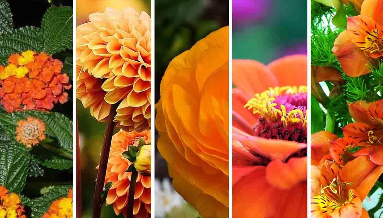 fiorellini arancioni