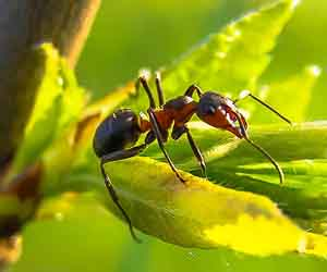 formiche - Insetti striscianti