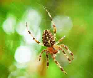 ragno - insetto strisciante