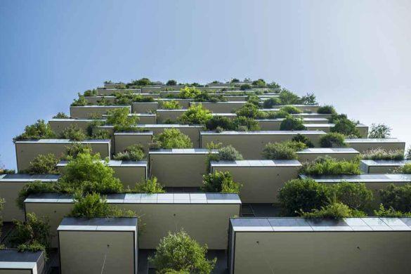 migliori-piante antizanzara da usare casa