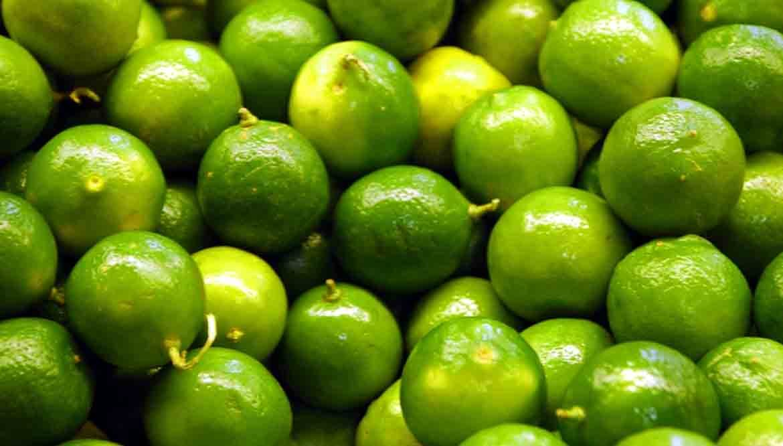 mapo frutta - agrume