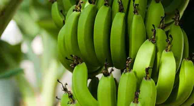 banano banane