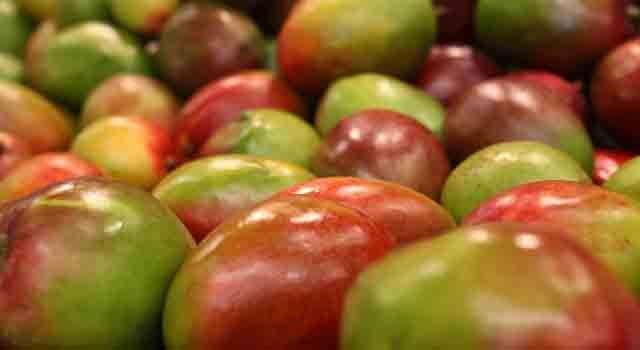 mango frutti esotici