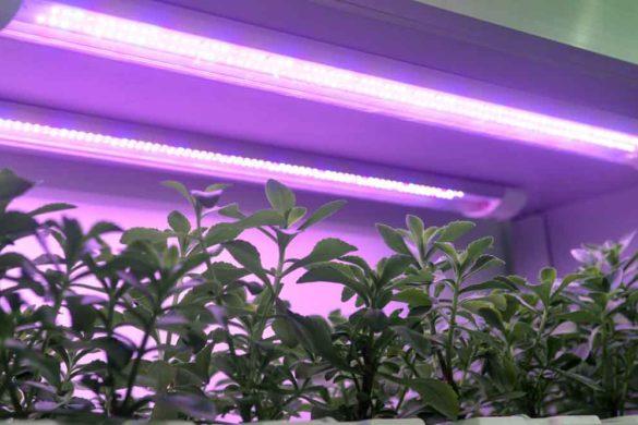 coltivazione a led
