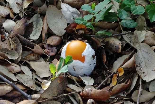 Ovulo fungo allo stadio iniziale