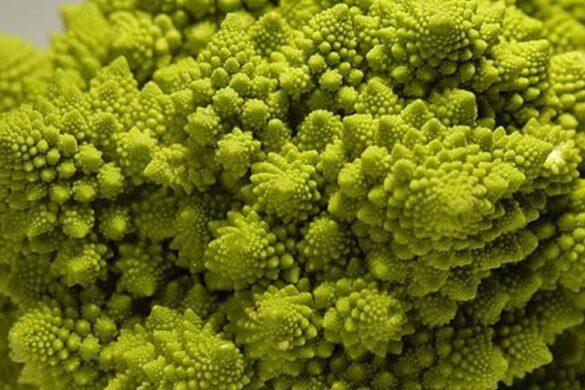 cavolo romano o broccolo romanesco
